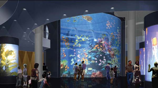 downtownclearwateraquarium4